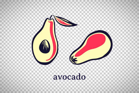 Hand drawn stylized avocado. Vector fruit isolated on transparent background. Graphic illustration for logo or icon.