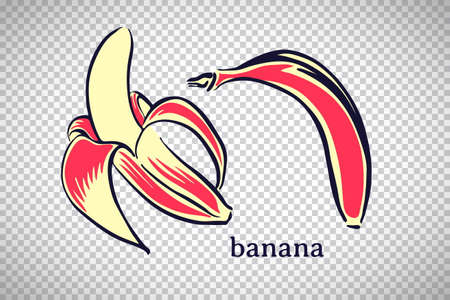 Hand drawn stylized banana. Vector fruit isolated on transparent background. Graphic illustration for logo or icon.