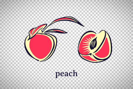 Hand drawn stylized peach. Vector fruit isolated on transparent background. Graphic illustration for logo or icon. 向量圖像