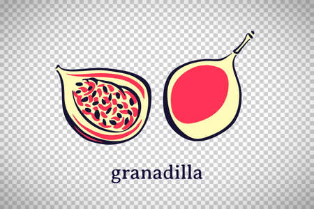 Hand drawn stylized granadilla. Vector fruit isolated on transparent background. Graphic illustration for logo or icon. 일러스트