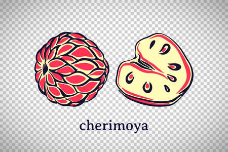 Hand drawn stylized cherimoya. Vector fruit isolated on transparent background. Graphic illustration for logo or icon.