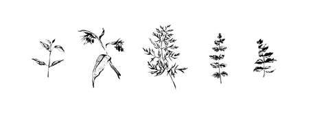 Hand drawn set of wild flowers and  leaves. Outline plants painting by ink pen. Sketch or doodle style botanical vector illustration. Black isolated herbs on white background.