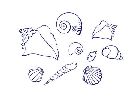 Vector outline cartoon seashell set. Graphic marine illustration isolated on white background for coloring book.