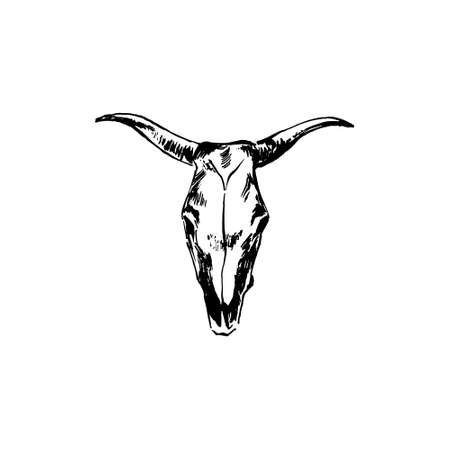 Bison skull hand drawing by ink. Buffalo cranium vector illustration. Cow head bone black isolated on white background.
