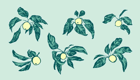 Vintage hand drawing apple tree branches set. Vector fruit and leaf isolated on blue background. Graphic grunge ink drawn illustration. 일러스트