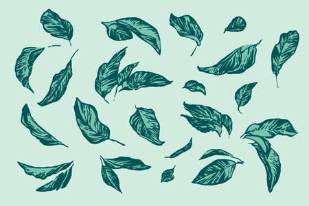 Vintage hand drawing apple tree leaf set. Vector foliage on blue background. Graphic grunge ink drawn illustration.