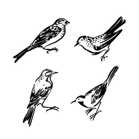 Wild birds collection. Vector animal illustration, hand drawn monochrome silhouettes painted by ink, black isolated on white background.