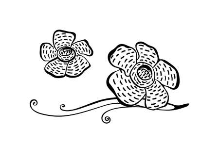 Hand drawn rafflesia plant modern outline sketch. Vector black ink drawing flower isolated on white background. Graphic illustration.