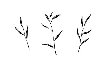 Set of hand drawn wild plants. Outline herbs with leaves silhouette brush ink painting. Black isolated vector on white background.