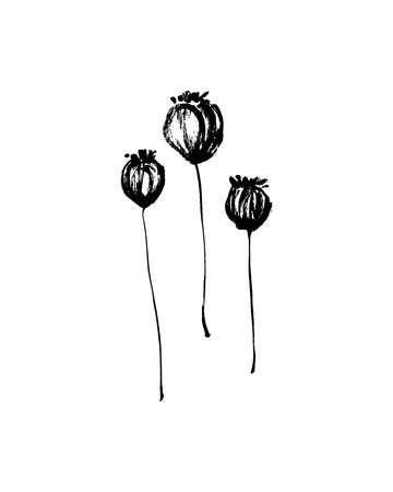 Conjunto de vainas de semillas de amapola secas dibujadas a mano pintadas con tinta. Siluetas de vector de pintura de pincel de estilo grunge. Impresión aislada negra sobre fondo blanco.