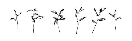Vector set of hand drawn wild plants painted by ink. Outline herbs with leaves silhouette brush painting. Black isolated on white background.