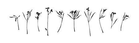 Set of hand drawn wild plants with small flowers. Outline herbs with leaves silhouette brush ink painting. Black isolated vector on white background. Graphic illustration. Illustration