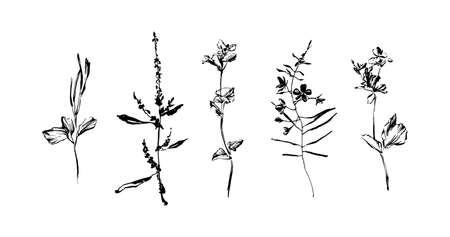 Set of hand drawn wild plants. Outline herbs with leaves and flowers, ink painting silhouette. Black isolated vector on white background. Illustration