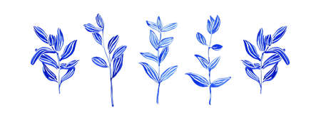 Set of hand drawn wild herbs. Sketch botanical illustration. Painting by blue watercolor plants isolated on white background. Aquarelle art design elements.  Stock Photo