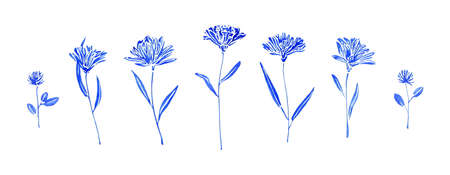 Set of hand drawn wild flowers. Sketch botanical illustration. Painting by blue watercolor plants isolated on white background. Aquarelle art design elements.  Stock Photo
