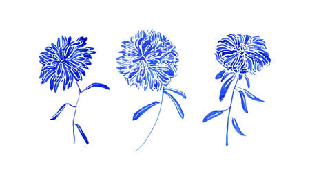 Aster flowers set painting by blue watercolor, botanical vintage collection. Hand drawn floral blossom plants isolated on white background. Aquarelle art design elements.