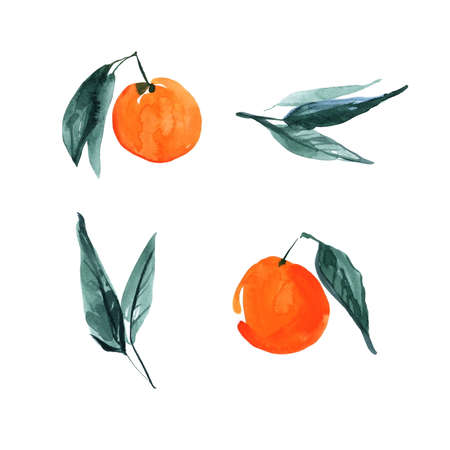 Set of hand drawn orange citrus fruits with leaves. Sketch botanical illustration painting by watercolor isolated on white background. Aquarelle art design elements.