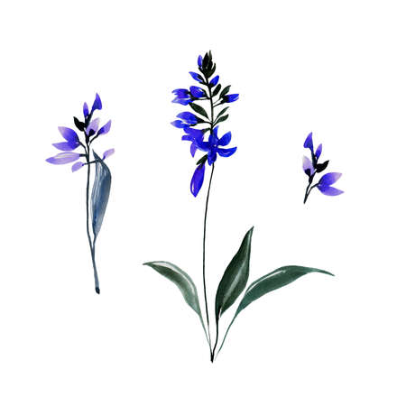 Set of hand drawn blue bell flowers with leaves. Sketch botanical illustration painting by watercolor isolated on white background. Decorative aquarelle art design elements.