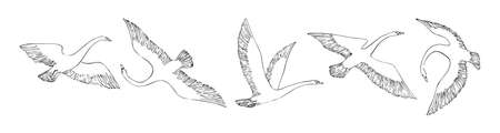 Hand drawn flying swans set. Wild birds painted by ink. Decorative vector outline illustration. Sketch style.  向量圖像