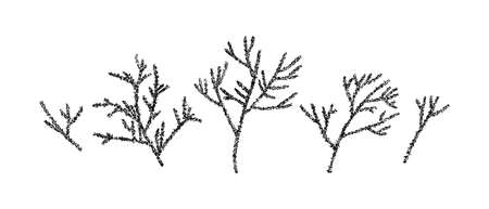 Hand drawn prickly branch collection painting by ink. Sketch botanical vector illustration. Black isolated outline plants on white background.