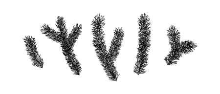 Hand drawn fir prickly branch collection painting by ink. Sketch botanical spruce vector illustration. Black isolated outline plants on white background. 向量圖像