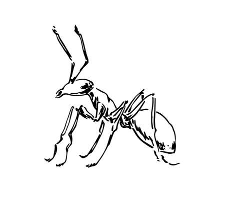Hand drawn ant insect, one pismire painted by ink, emmet sketch vector illustration, black isolated character on white background. 向量圖像