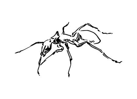 Hand drawn ant insect, graphic pismire painted by ink, emmet sketch vector illustration, black isolated character on white background.