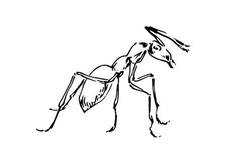 Hand drawn ant insect, stylized pismire painted by ink, emmet sketch vector illustration, black isolated character on white background.