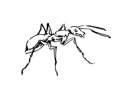 Hand drawn ant insect, outline pismire painted by ink, emmet sketch vector illustration, black isolated character on white background.