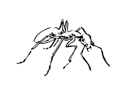 Hand drawn ant insect, doodle pismire painted by ink, emmet sketch vector illustration, black isolated character on white background.