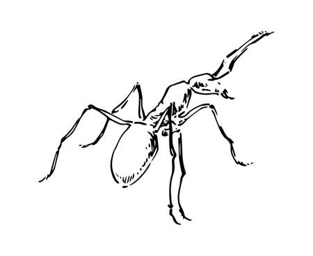 Hand drawn ant insect, small pismire painted by ink, emmet sketch vector illustration, black isolated character on white background.