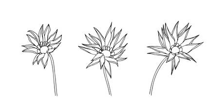 Abstract gatzania outline flowers set. Vector stylized sketch decorative hand drawn illustration. Black isolated doodle image on white background. 向量圖像