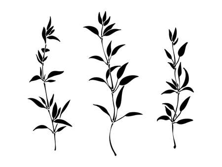 Set of hand drawn silhouette of plants with leaves. Elegant wild herbs vector  illustration. Black isolated image on white background.
