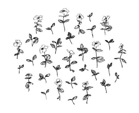Set of hand drawn wild plants with leaves and flowers. Stylized sketch decorative herbs vector illustration. Black isolated image on white background.
