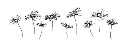 Set of hand drawn chamomile flowers. Stylized sketch decorative botanical vector illustration. Black isolated image on white background.