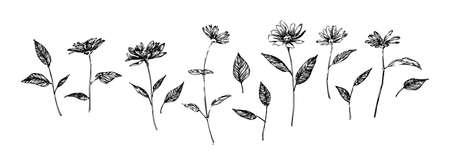 Set of hand drawn graphic flowers. Stylized sketch decorative botanical vector illustration. Black isolated image on white background.