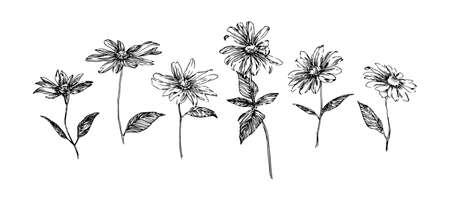 Hand drawn set of sketch flowers. Decorative floral botanical vector illustration. Black isolated image on white background.