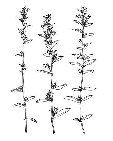 Set of hand drawn wild plants. Outline herbs with leaves and flowers ink painting. Black isolated sketch vector on white background.