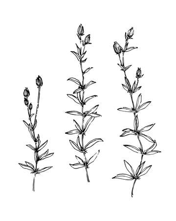 Set of hand drawn wild plants with flower buds. Outline herbs sketch ink painted. Black isolated botanical vector illustration on white background.