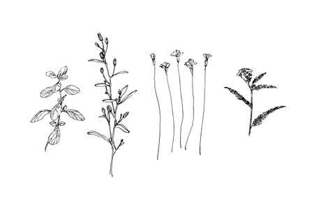 Set of different hand drawn wild plants. Outline herbs with leaves and flowers ink painting. Black isolated sketch vector on white background.