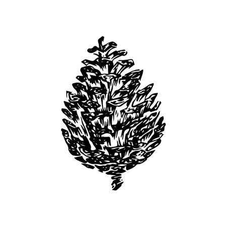 Hand drawn pinecone vector illustration. Linocut pine or fir cone decorative graphic image. Stylized monochrome black isolated on white background. 向量圖像