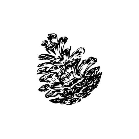 Hand drawn pinecone vector illustration. Linocut pine or fir cone decorative graphic image. Stylized monochrome engraved black isolated on white background.