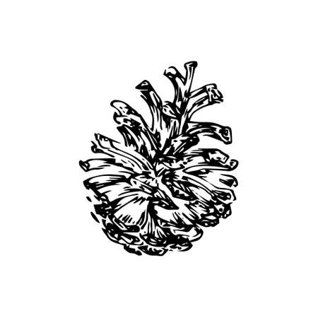 Hand drawn pinecone vector illustration. Linocut pine or fir cone decorative graphic image. Stylized monochrome botanical black isolated on white background.