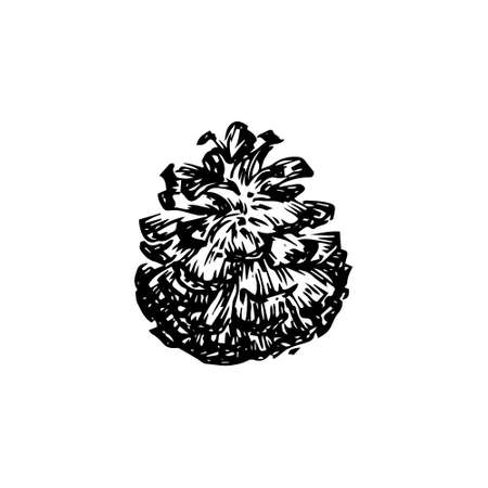 Hand drawn pinecone vector illustration. Linocut pine or fir cone decorative graphic image. Stylized christmas monochrome black isolated on white background.