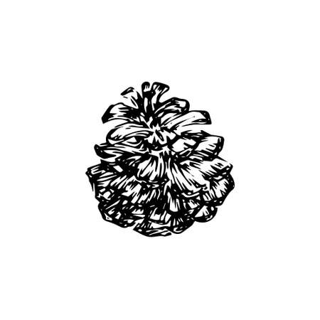 Hand drawn pinecone vector illustration. Linocut pine or fir cone decorative graphic image. Stylized monochrome etching black isolated on white background.