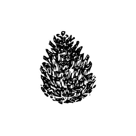 Hand drawn pinecone vector illustration. Linocut pine or fir cone decorative graphic image. Stylized vintage monochrome black isolated on white background.