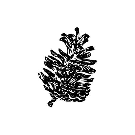 Hand drawn pinecone vector illustration. Linocut pine or fir cone decorative graphic image. Stylized monochrome botany black isolated on white background. 向量圖像