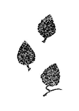 Hand drawn pinecone vector illustration set. Linocut pine or fir cone decorative graphic image. Stylized monochrome black isolated on white background.