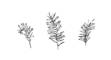 Set of hand drawn wild equisetums. Outline horsetail collection painted by ink. Black isolated sketch vector on white background.