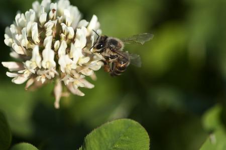 pollination: Pollination Stock Photo